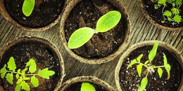 Så väljer du rätt jord till vårens planteringar