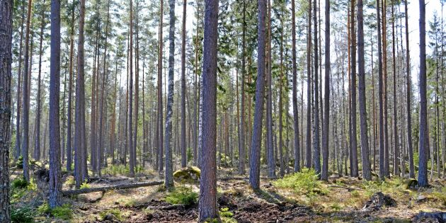 Mindre skog för pengarna i hela landet