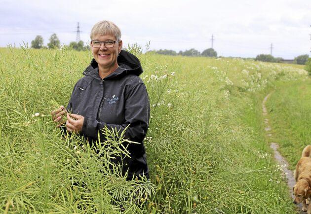 Svensk rapsodling måste bli ännu bättre på att vässa växtskyddsmedelsstrategierna och uppdatera bekämpningströsklar för att undvika den resistensutveckling som skett på skadegörare i andra europeiska länder, anser Anneli Kihlstrand, VD för Sveriges Frö- och Oljeväxtodlare, (SFO).