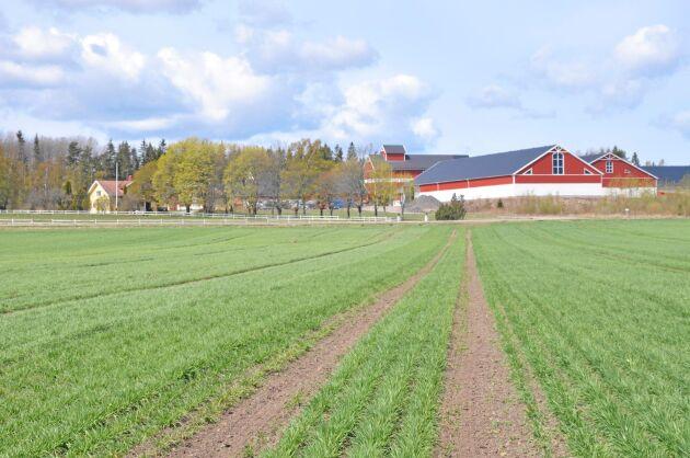 Storkila. Emil Olsson växte upp på Storkila gård i Gullspångs kommun. Här tillverkas i ekogödseln.