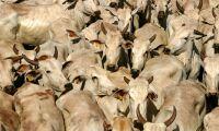 Spårar 5 000 containrar i jakten på ruttet kött