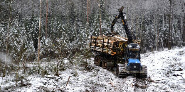 För Sverige är skogen mer än bara träd