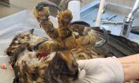 Ny typ av fågelinfluensa upptäckt