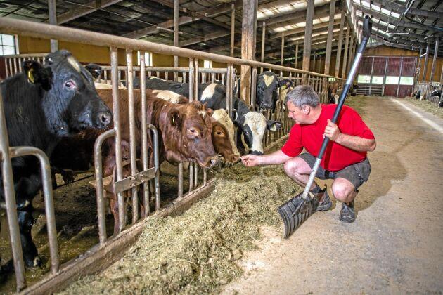 Jan Forssell är uppfödare och driver Bjursås lantbruk utöver sin roll som ordförande för Sveriges Nötköttsproducenter.