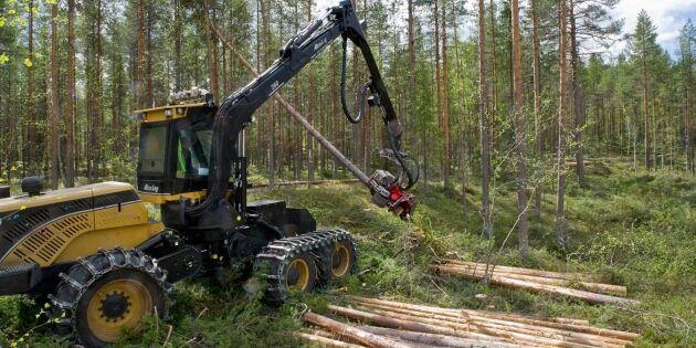Avverkningarna slår rekord efter sommarens skogsbränder