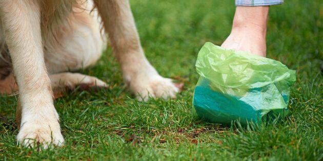 9 av 10 hundägare plockar upp hundbajset