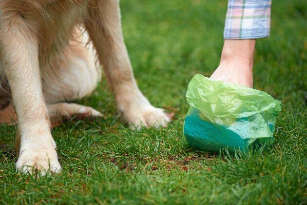 Kom ihåg bajspåsarna när du går ut med hunden!