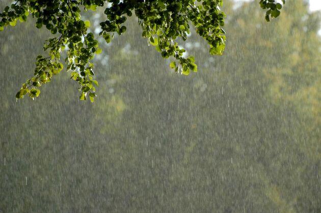 Västra Götalands och Jönköpings län kan få stora mängder regn på kort tid.