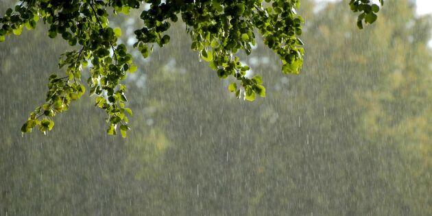 Regnet kommer – med risk för översvämning