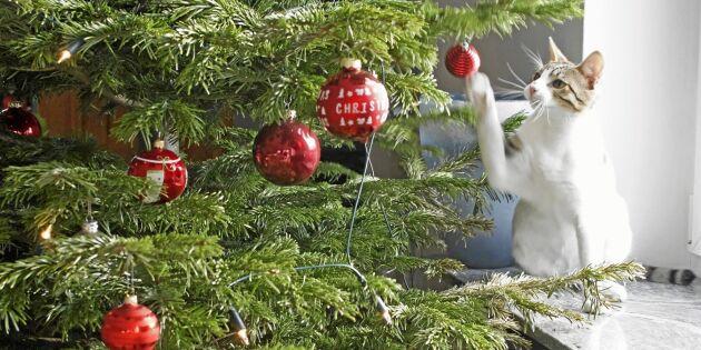 Kattsäkra julgranen – 7 tips för att undvika olyckor