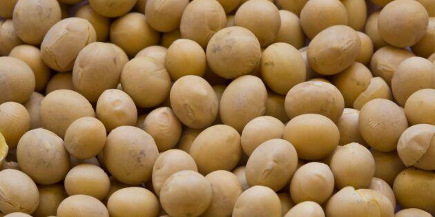 EU-import av soja ska minska
