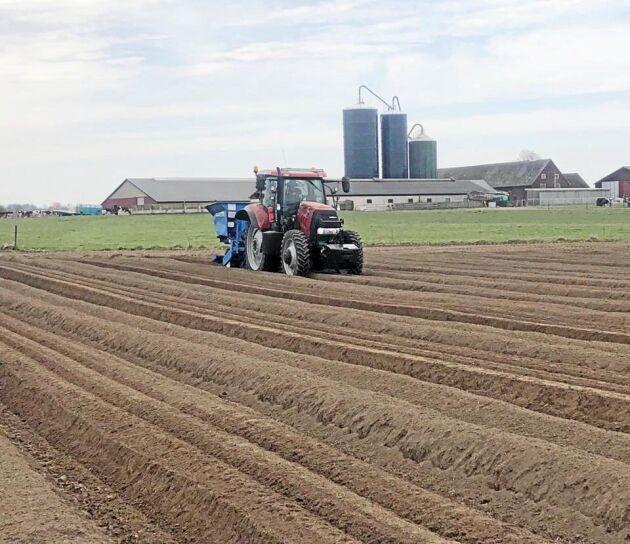 Vårbruket pågår parallellt med den ovanligt tidiga skörden. I år odlar man bland annat utsädespotatis.