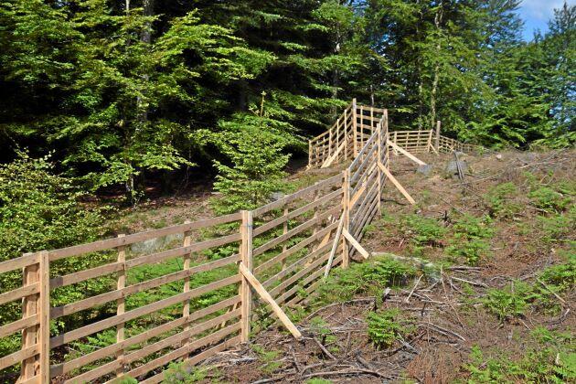 Nu kommer trähägnen mot vilt som testats på flera platser i Halland att börja tillverkas kommersiellt.