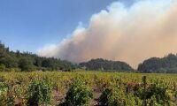 Jättebranden slukar vingårdar i Napa Valley