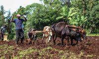 Svenska pengar hjälper coronadrabbade bönder