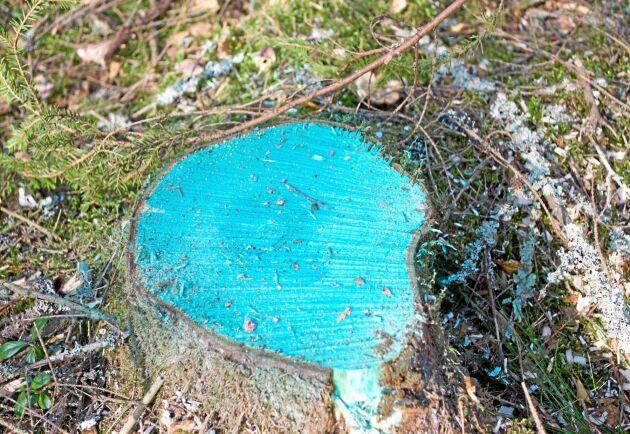 Behandling med pergamentsvamp är ett sätt att stoppa spridning av rotticka till gallringsstubbar, men används i Sverige vanligtvis bara på gran.