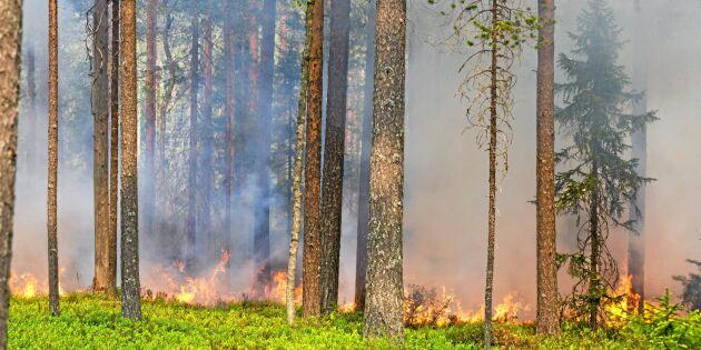 Skogsbruket skapar inte extremväder