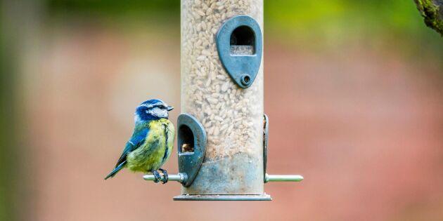 Tål fåglar salt och margarin? Experten reder ut!