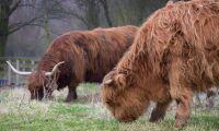 Naturbeteskött bra för den biologiska mångfalden