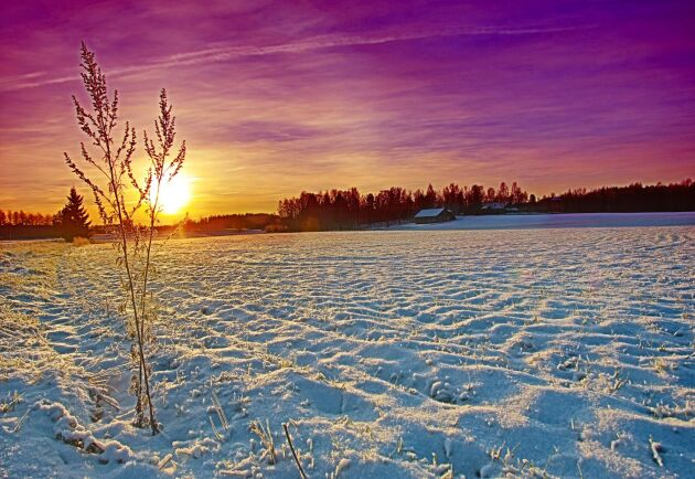 Höstgrödorna i EU har än så länge klarat vintern bra, visar senaste MARS-rapporten.
