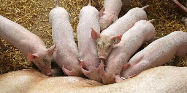 EU kräver skadestånd för grisembargo