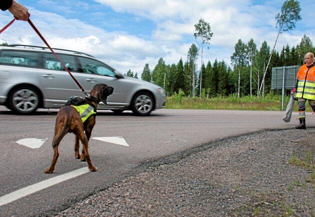 Bilarna saktar inte in trots att det befinner sig folk och hundar på vägrenen. Vare sig varningstält, saftblandare eller varselkläder hjälper.