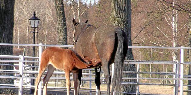 Nya hästjobbet lockar många