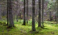 Sveaskog för och emot neonikotinoider
