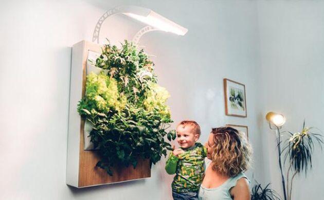 På väggen kan du börja plocka din sallad till middagen, kanske? Herbert heter den här anordningen.