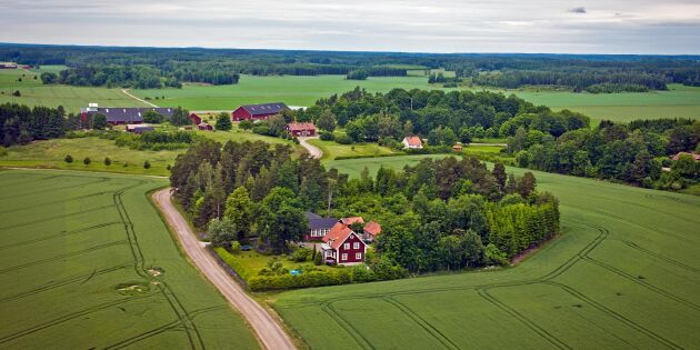 """Ekonom: """"Gårdsstödet motverkar konkurrenskraftiga gårdar"""""""
