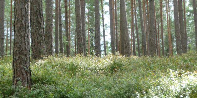 Så många nyckelbiotoper hann Skogsstyrelsen registrera