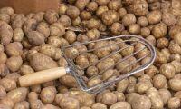 Matpotatisen ökar med 20 procent