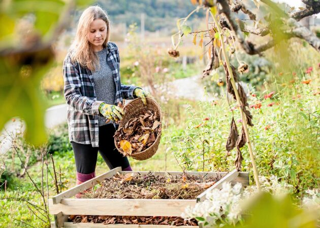 Så smart! 6 sätt att använda höstlöv i trädgården
