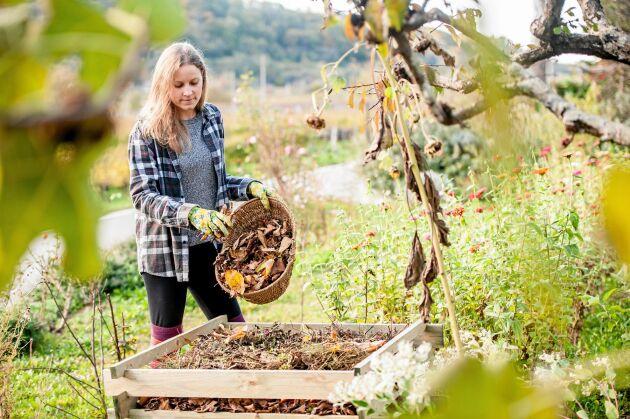 Spara löven. De är guld i din trädgård.