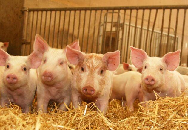 De svenska producenterna använder minst antibiotika i sin produktion.