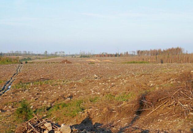 Tjeckien är hårt angripet av granbarkborrar och avverkning sker i stor skala.