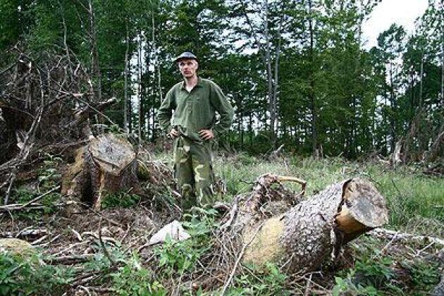 Stubbrytaren har ett fett jobb hemma hos Gert Paulsson. I snart två år har han efterlyst skälig ersättning för de förhöjda stubbar som skogsarbetarna var tvungna att ta av säkerhetsskäl. Foto: Torbjörn Esping