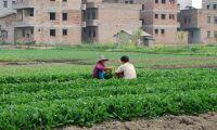 Studiebesök i Kina öppet för unga bönder