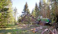 """""""Skogsbruksplanen symbolen för ett ansvarsfullt skogsbruk"""""""