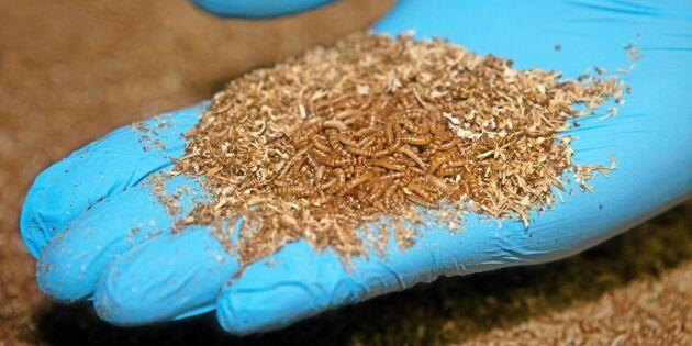 Finland vill hitta nya vägar för insektsmaten