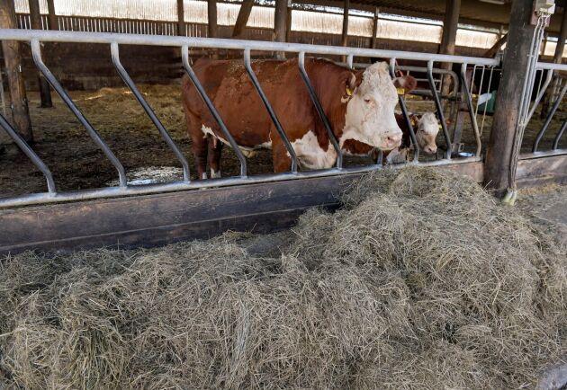 I dag tillåts 5 procent konventionell foderråvara i ekologiskt foder till enkelmagade djur. Detta vill industrin under en begränsad period höja till 10 procent. Arkivbild.