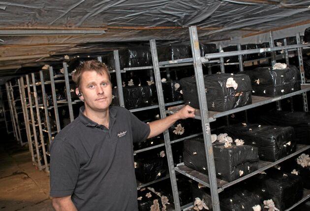 """""""Det var viktigt för oss att snabbt ha egenodlad svamp igen"""", säger Mathias Persson."""