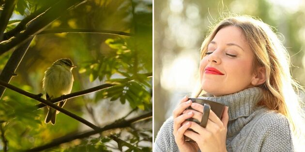 Forskning visar: Här är fågeln vars kvitter bäst minskar din stress!