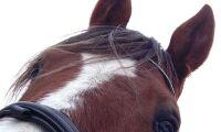 Hovrätten avgjorde tvist om hästköp