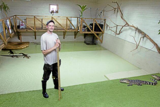 Djurnörden Ola Oscarsson skaffade sex alligatorer, bland annat för att bli av med Lilla Bondgårdens tuppkycklingar.