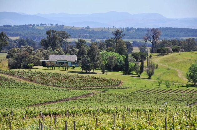 En vingård i Hunter Valley i Australiska New South Wales. Årets skörd ser ut att bli den lägsta på flera år.