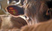 Säkrare djurhantering med lätta grindar