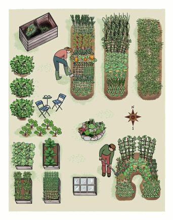 Land odlarskola ger dig råd för en odling på 100 kvadrat.