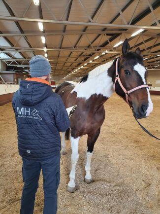 Sally är en av 20 hästar hos Skånsta Ryttare som fick den neurologiska formen av EHV-1 vintern 2019. Ridskolehästarna är nu friska och går sina lektioner men behöver längre viloperioder.