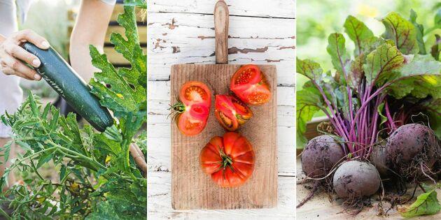 GUIDE: Så fryser du in grönsaker – allt du behöver veta!